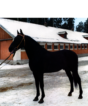 http://oliverdignal.de/files/gimgs/75_horse1-ivmc.png